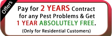 Pest Control Offers In Navi Mumbai