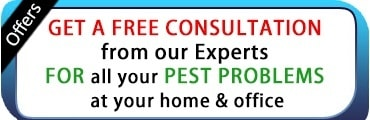 Pest Control Offers In Pune
