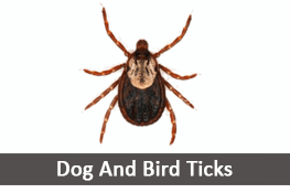 Dog Ticks & Fleas, Bird Ticks Pest Control Services